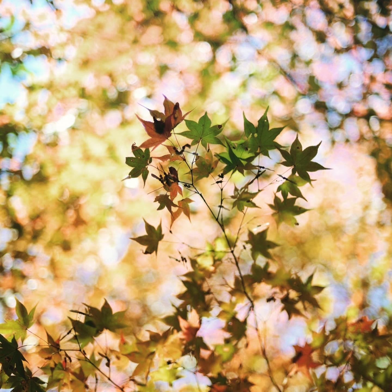 秋の宴の写真